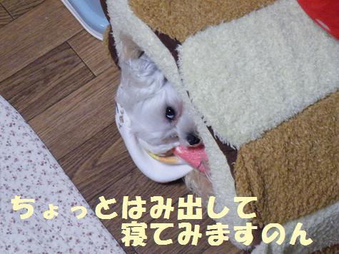 2008_05160008.jpg