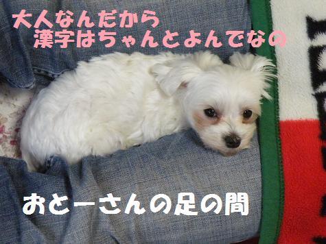 2008_05190001.jpg