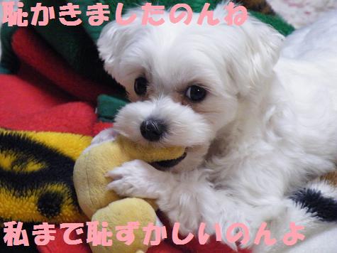 2008_05190003.jpg