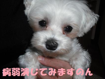2008_05190019.jpg