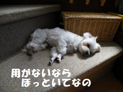 2008_052902.jpg
