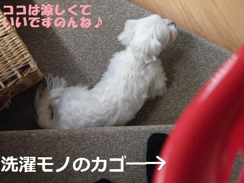 2008_052904.jpg