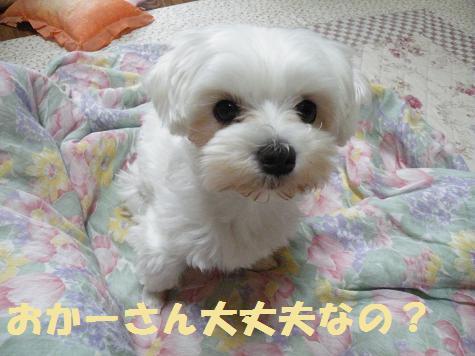 2008_06040001.jpg