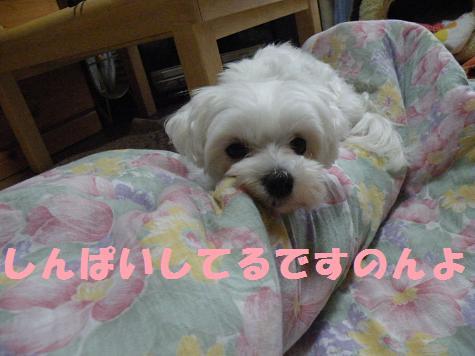2008_06040002.jpg