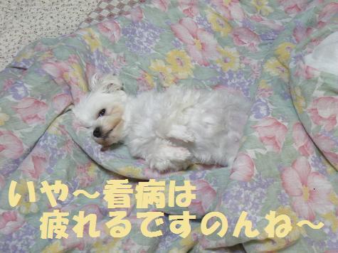 2008_06040004.jpg