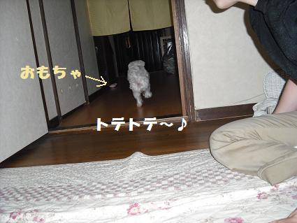 2008_0609502.jpg