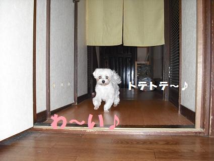 2008_0609503.jpg