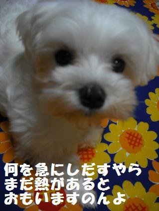 2008_06100021.jpg