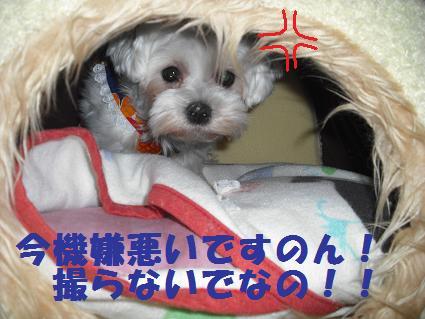 2008_06100034.jpg