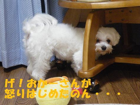 2008_06110046.jpg