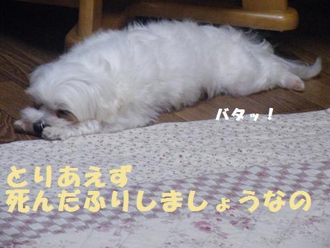 2008_06110051.jpg