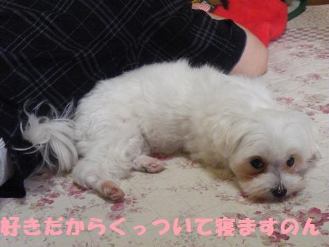 2008_06180010.jpg