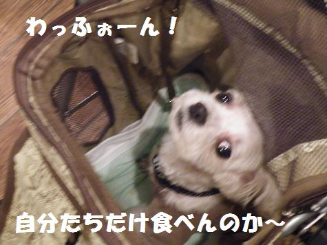 2008_06230031.jpg
