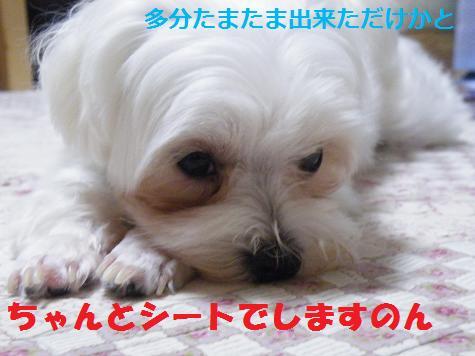 2008_06280001.jpg