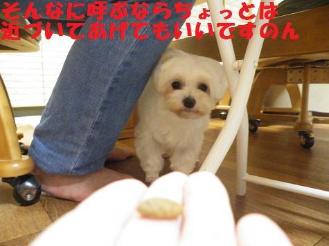 2008_06280005.jpg