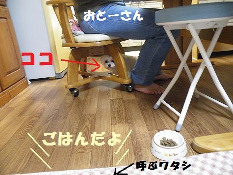 2008_06280079.jpg
