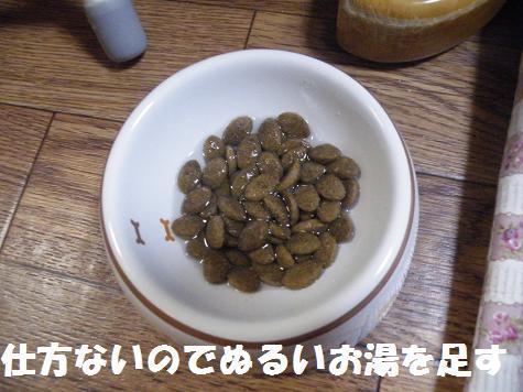 2008_06280085.jpg