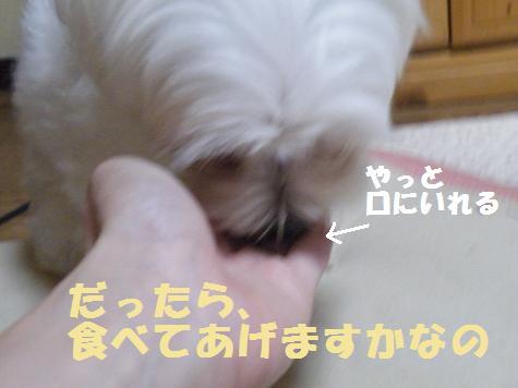 2008_06280087.jpg