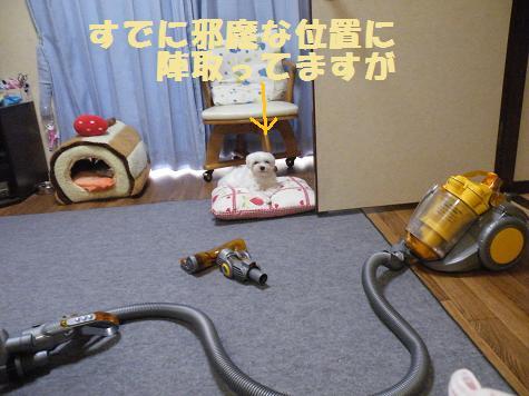 2008_07030089.jpg