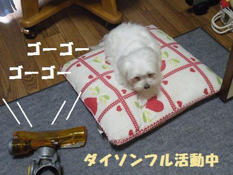 2008_07030091.jpg