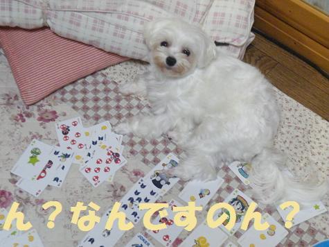 2008_07080001.jpg