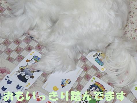 2008_07080002.jpg