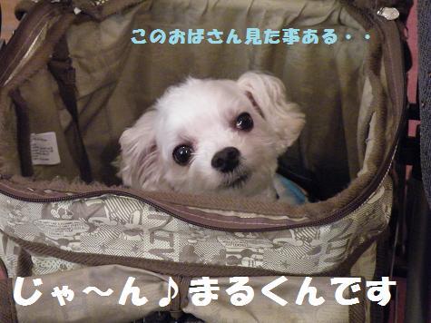 2008_07140006.jpg