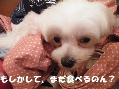 2008_07140015.jpg