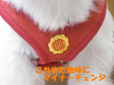 2008_07220016.jpg