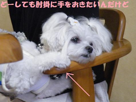 2008_07290007.jpg