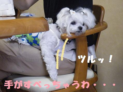 2008_07290009.jpg
