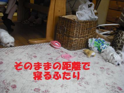 2008_07290086.jpg