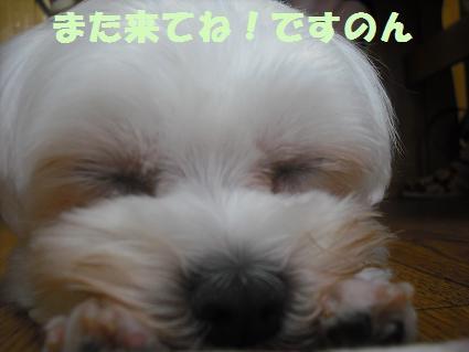 2008_07290088.jpg