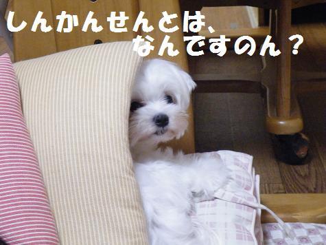 2008_08070031.jpg