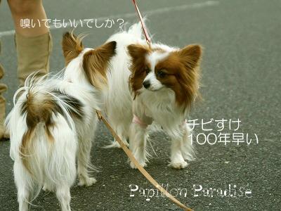 2008032903.jpg
