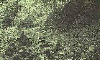 岩のかけらと落ち葉で覆われた道