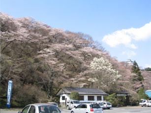 お丸山公園2