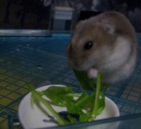 水菜を食う!