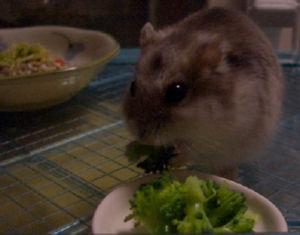 ブロッコシーを食う!
