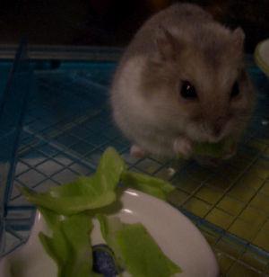 キャベツを食う!