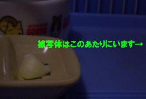 りんごとYUI君。。。ん?