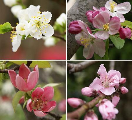 0411実の生る花