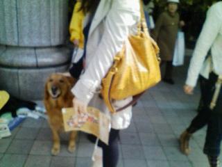0412募金犬