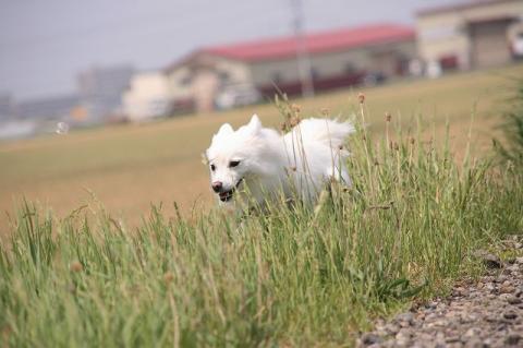 草わら散歩