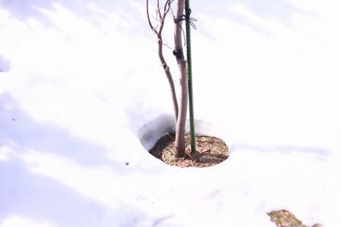 庭の雪解け♪