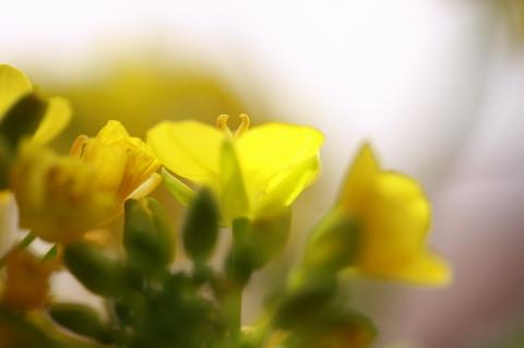 春を呼ぶ~~♪