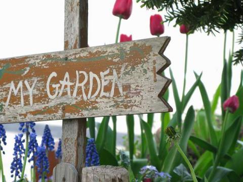 我が家の庭s-blog