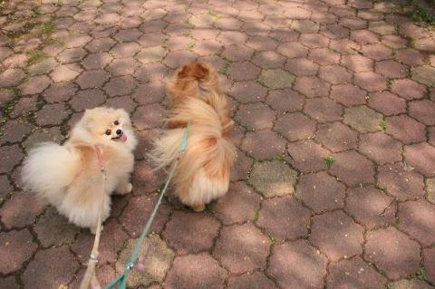 ケンマミ散歩