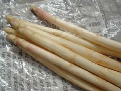 white aspara