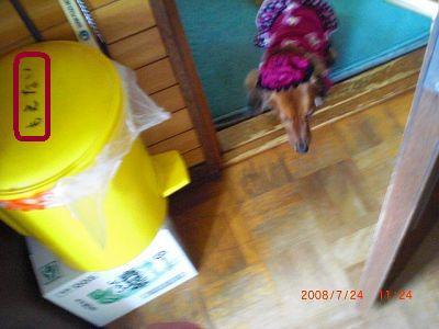 CIMG1105_20080724132238.jpg